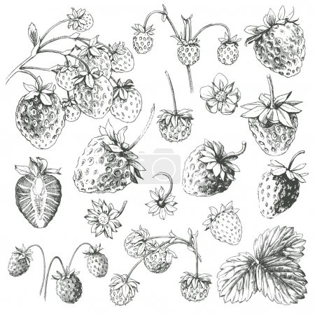 Great collection of hand drawn strawberries isolat...