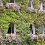 Green overgrown house in Kiedrich, Rheingau, Hesse...