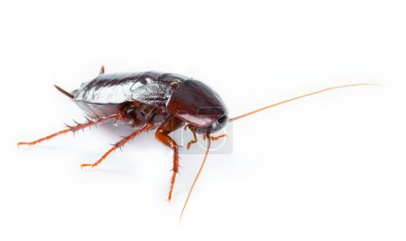 Art Cockroach bug isolated on white background
