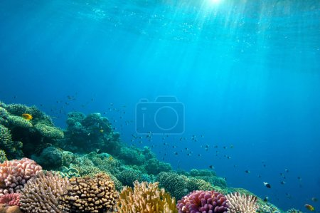 Photo for Ocean Underwater Background Image - Royalty Free Image