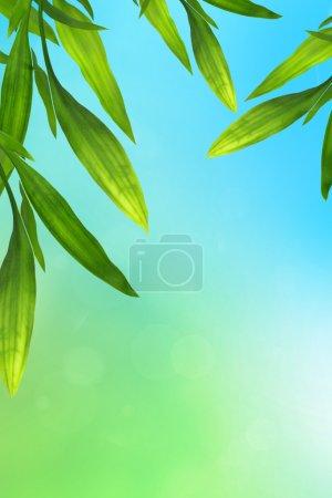 Photo pour Fond bleu et vert avec cadre de feuilles de bambou - image libre de droit