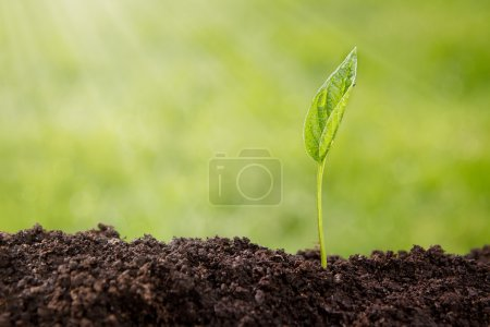Photo for Small plant growing up from soil over defocused nature background with copy space - Royalty Free Image