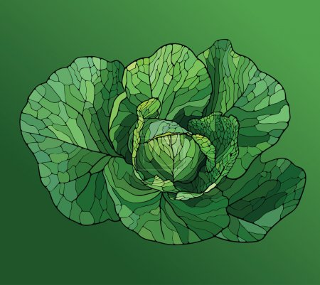 Illustration for Cabbage painted in the style of the mosaic on a green background - Royalty Free Image