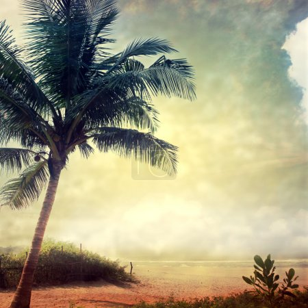 Photo for Grunge palm background - Royalty Free Image