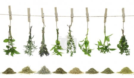Photo for Fresh herbs hanging on a rope - Royalty Free Image