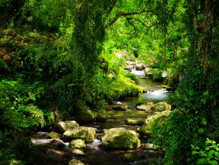 Foto de Arroyo en el bosque tropical. - Imagen libre de derechos