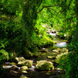 Stream in the tropical forest....