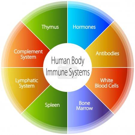 Illustration pour Une image d'un système immunitaire du corps humain . - image libre de droit