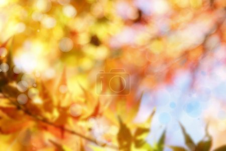 Photo for Soft colors in a forest - Royalty Free Image