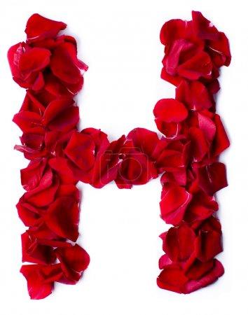 Alphabet h aus roter Rose