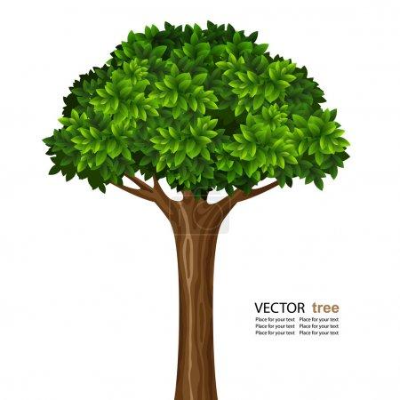 Illustration pour Un seul arbre vert vif isolé sur fond blanc - image libre de droit