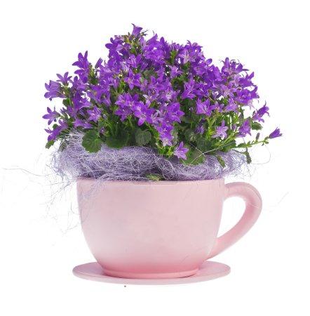 Composition of kampanula flowers