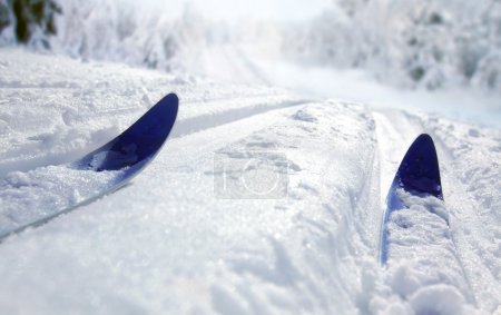 Cross Country Ski...