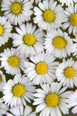 Květina 22