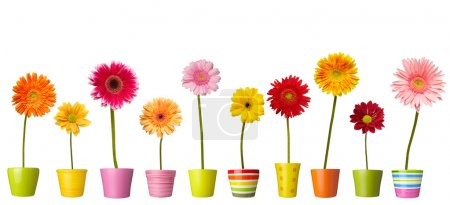 Collection of daisy flower on white background. ea...