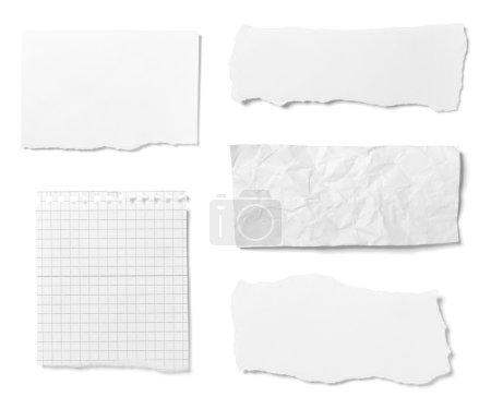 Foto de Colección de varios pedazos de papel rotos sobre fondo blanco. Cada uno es disparado por separado. - Imagen libre de derechos