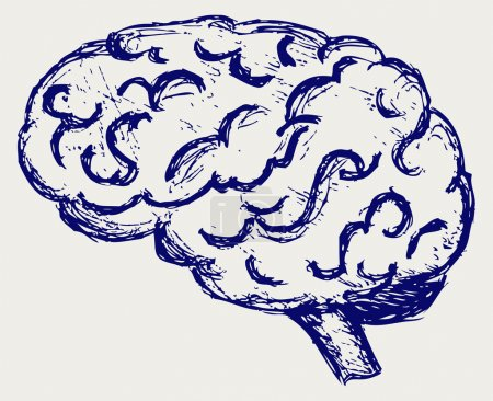 Photo for Human brain. Sketch - Royalty Free Image