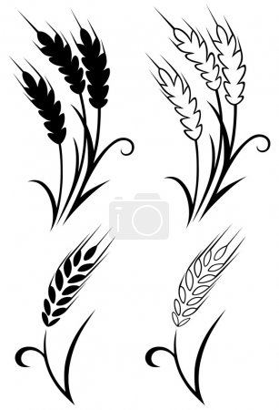 Illustration for Wheat and rye - Royalty Free Image