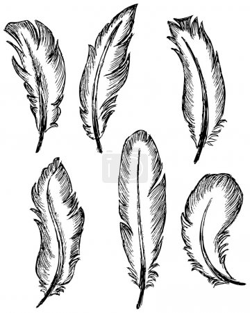 Illustration for Feather Set - Royalty Free Image