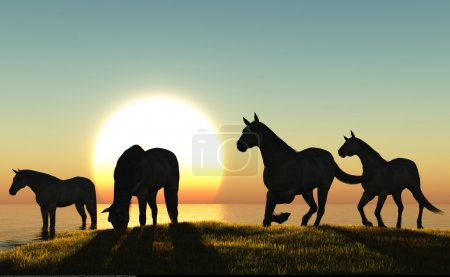 Photo pour Le groupe de chevaux au coucher du soleil . - image libre de droit