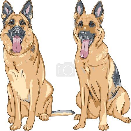 Vector color sketch two dog German shepherd breed