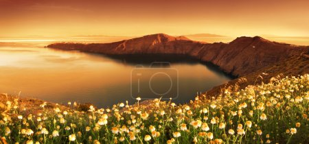 Photo for Sunrise Wildflowers on Santorini - Royalty Free Image