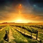 Beautiful Sunset over a Barossa Vineyard...