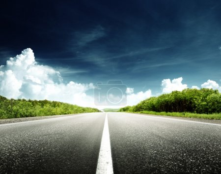 Photo for Road in forest - Royalty Free Image