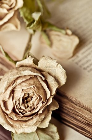 Vintage still life with dry rose and old book