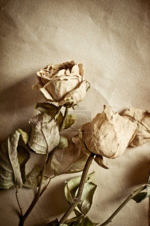 Roses and old book
