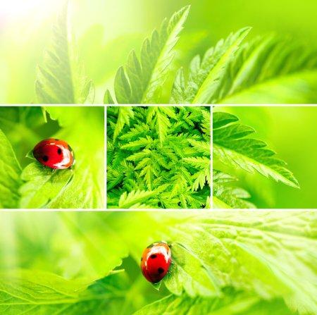 Fond vert nature