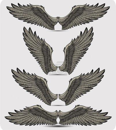 Wings set. Vector illustration.
