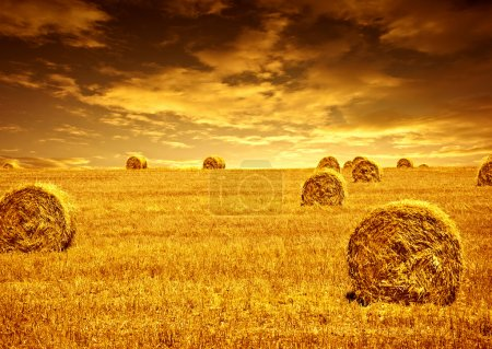 Photo pour Récolte de blé, magnifique coucher de soleil, paysage pittoresque, champ de seigle doré avec botte de foin, saison des cultures, production agricole alimentaire, semences de pain biologiques cultivées, beauté de la nature en automne - image libre de droit