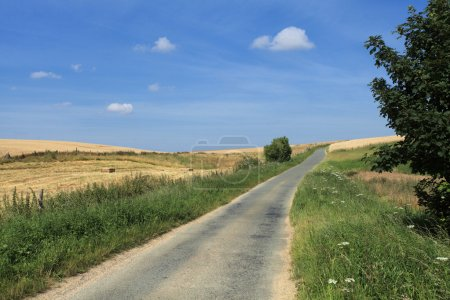 Road in the country in summer under the sun