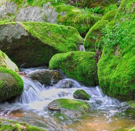 Small streams over mossy rocks