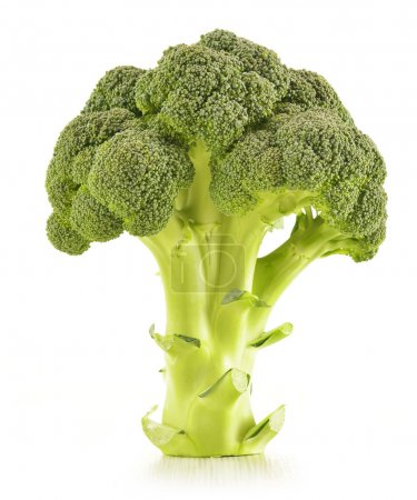 Raw broccoli isolated on white