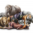 Group of animals on white background...