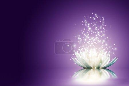 Photo pour Fleur de lotus magique - image libre de droit