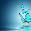 Blue Magic butterfly over water...