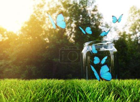 Photo pour Papillons décollent de bocal en verre - image libre de droit