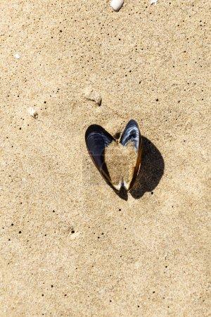 Photo pour Coquille ouverte sur la plage - image libre de droit
