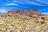 Krásné horské pouštní krajina s kaktusy