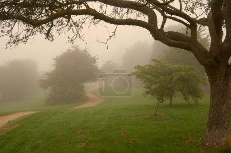 Morning english fog in a park, warm light