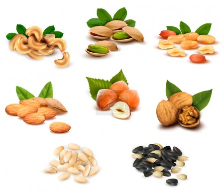 Big collection of ripe nuts and seeds Vector