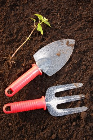 Gardening tools and a plant