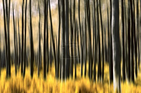 Photo pour Flou abstrait du mouvement des arbres dans une forêt aux couleurs altérées - image libre de droit