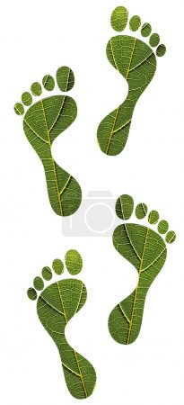 Photo for Concept of environmental conservation, green footprints, sustainable dvelopment, etc. created using macro image of a leaf with clipping path - Royalty Free Image