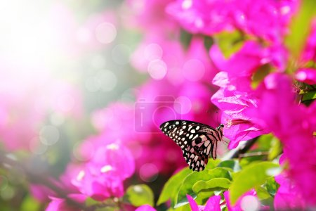 Majestuosa escena matutina con mariposa alimentándose de néctar de un bou