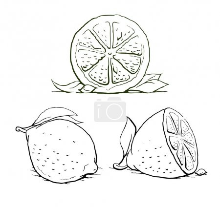 Illustration for Ripe lemon with leaf. vintage set. vector illustration isolated on white background - Royalty Free Image