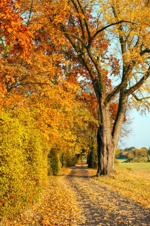 Pathway in the autumn park